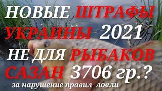 НОВЫЕ ШТРАФЫ УКРАИНЫ 2021 Не для рыбаков Сазан 3706гр за единицу