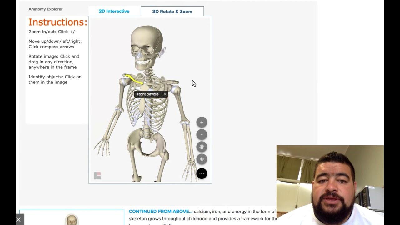 Upper Body Bones Youtube