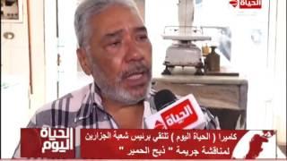 بالفيديو..رئيس شعبة الجزارين يكشف أسباب انتشار ذبح الحمير