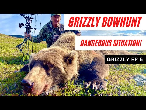 GRIZZLY BEAR BOWHUNT BECOMES DANGEROUS   THE REALITY OF HUNTING GIANT GRIZZLIES WITH A BOW   EP 4