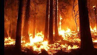 #AmazonFires THe MOST Severe Forest Fire: Amazon Rainforest Fire