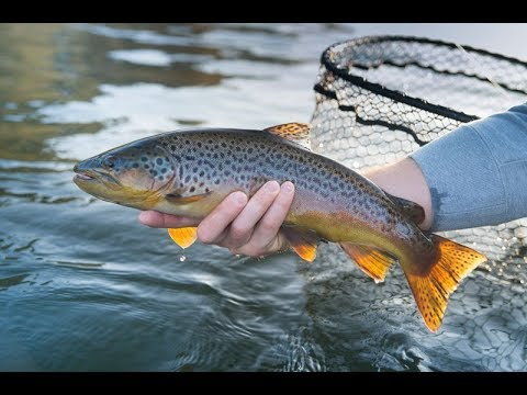 Arkansas' Gastons Resort Trout Fishing