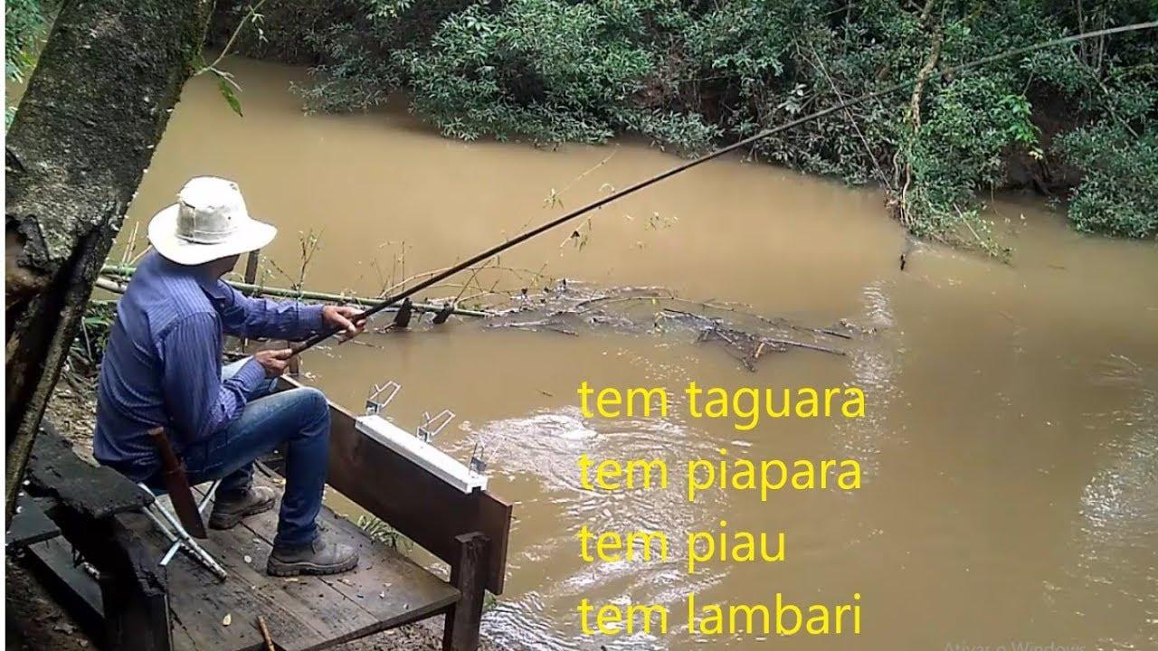 Download PESCARIA DE TAGUARA E LAMBARI