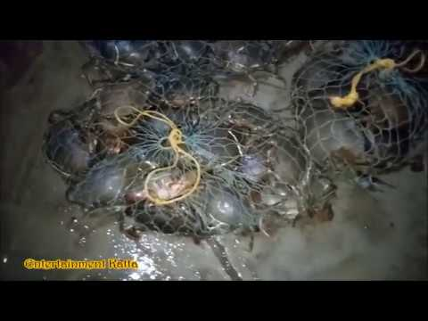 Malad Fish Market In Morning | Biggest Fish Market In Mumbai