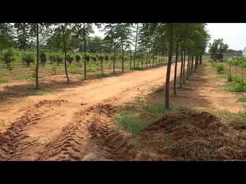 farmland at shadnagar in 250 acers malabar neem plantation 9581606161.