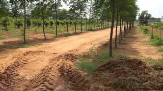 farmland at shadnagar in 250 acers malabar neem plantation 9581606161.