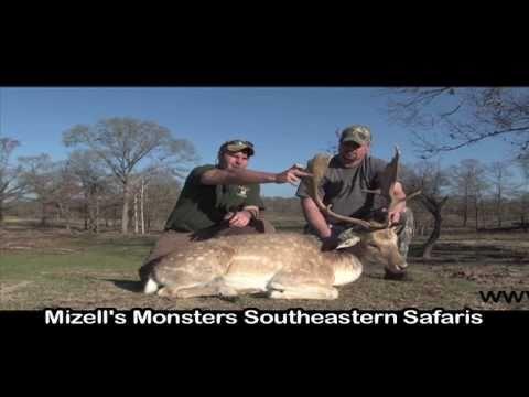 Beach Bucks, Exotic Fallow Deer Hunting Near The Gulf With South Coast Safaris