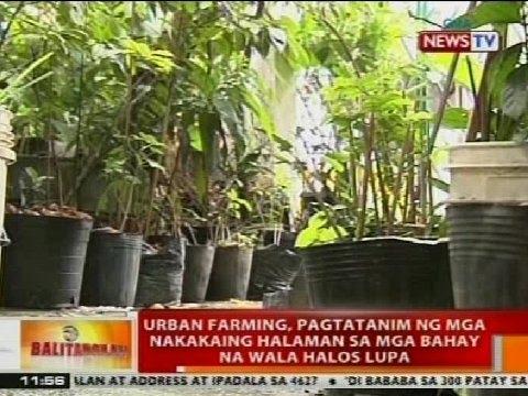 BT: Urban farming, pagtatanim ng mga nakakaing halaman sa mga bahay na wala halos lupa