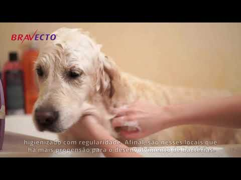 Bravecto apresenta: 5 cuidados básicos para seu cãozinho