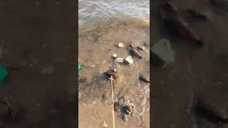 Жесть Вот что я нашёл на берегу Магнитная рыбалка Волга Самара