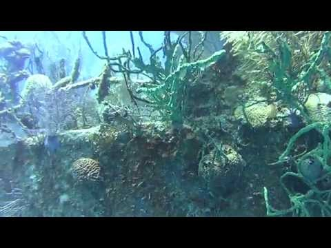 Scuba Diving Newman's Wall, Roatan, Honduras, Cocoview Resort