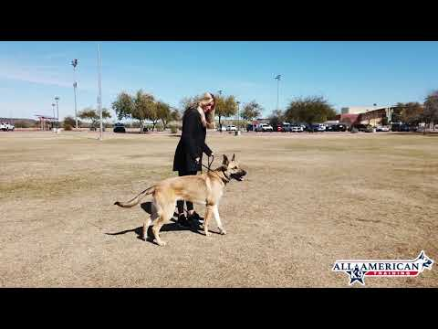 arizona-coyotes-jordan-oesterle-i-before-&-after-i-all-american-k-9-dog-training