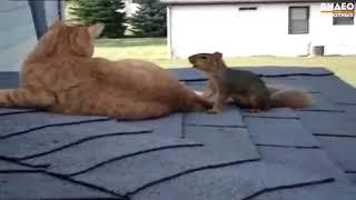 Белка играет с котом