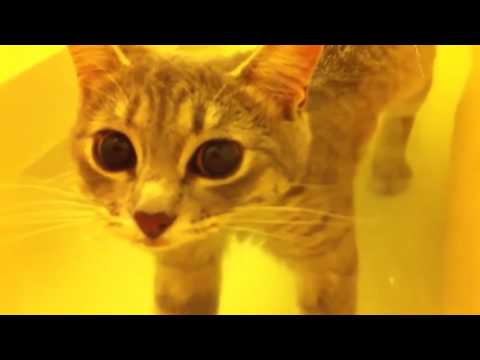 Funny CATS Enjoying Bath | CATS That LOVE Water Compilation