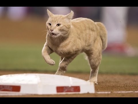 MLB Animals On The Field (HD)