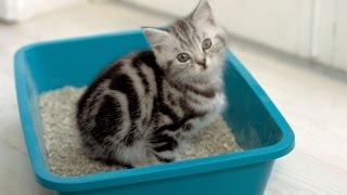 (Proven Method) How to Litter Train a Kitten