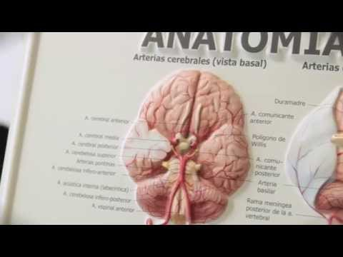 Master in Cognitive Neuroscience of Language