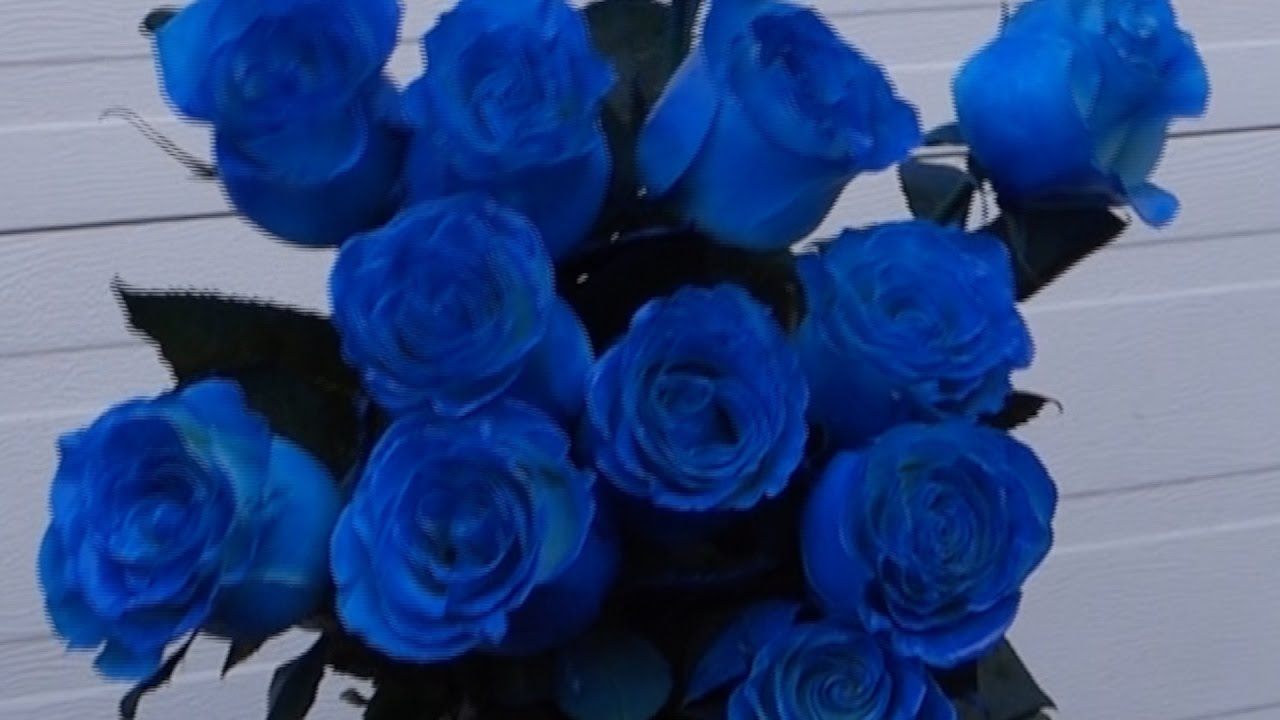 how to make blue roses youtube