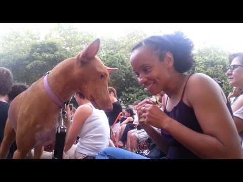 Living in France: Luna pharaoh hound dog first outdoor concert