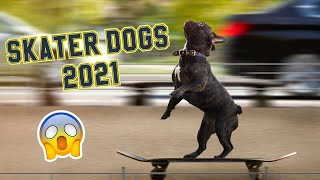 Dogs Skateboarding  Awesome Dogs On Skateboards 2021 (Must Watch) [So Funny]