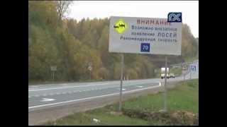 В Вологодской области пытаются сократить количество аварий с участием диких животных