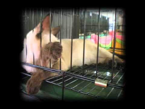 The Videocam Project-Event: Feline Fanciers Association of the Philippines Cat Show