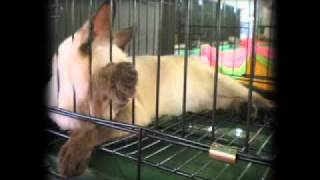 The Videocam Project-Event: Feline Fanciers Association of the Philippines Cat Show