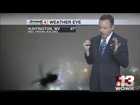 SPIDER! Scream!!!!   WOWK 13 Charleston, Huntington WV News, Weather, Sports