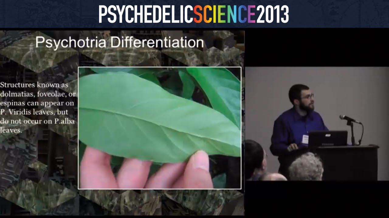 In Search of Entheogenic Molecules: Phytochemical Analysis from the  DMT-Nexus - David Nickles