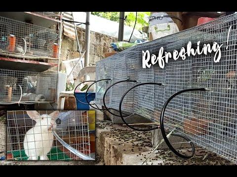 Rabbit Water System