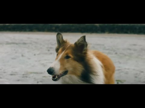 Новый Симейный Фильм ЛЕССИ-ВОЗВРАЩЕНИЕ ДОМОЙ трейлер