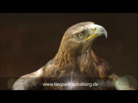 Greifvögel Tierpark Sababurg