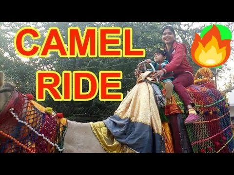 camel-riding-in-lucknow---amazing-camel-riding-by-super-shivani-&-dishita