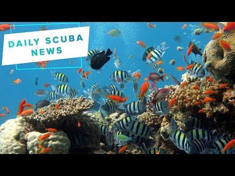 Daily Scuba News - Scuba Divers Urge To Protect Malta's Fish