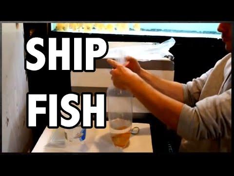 HOW TO: ship aquarium fish