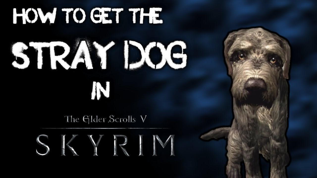 How To Get A Pet Dog In Skyrim Video