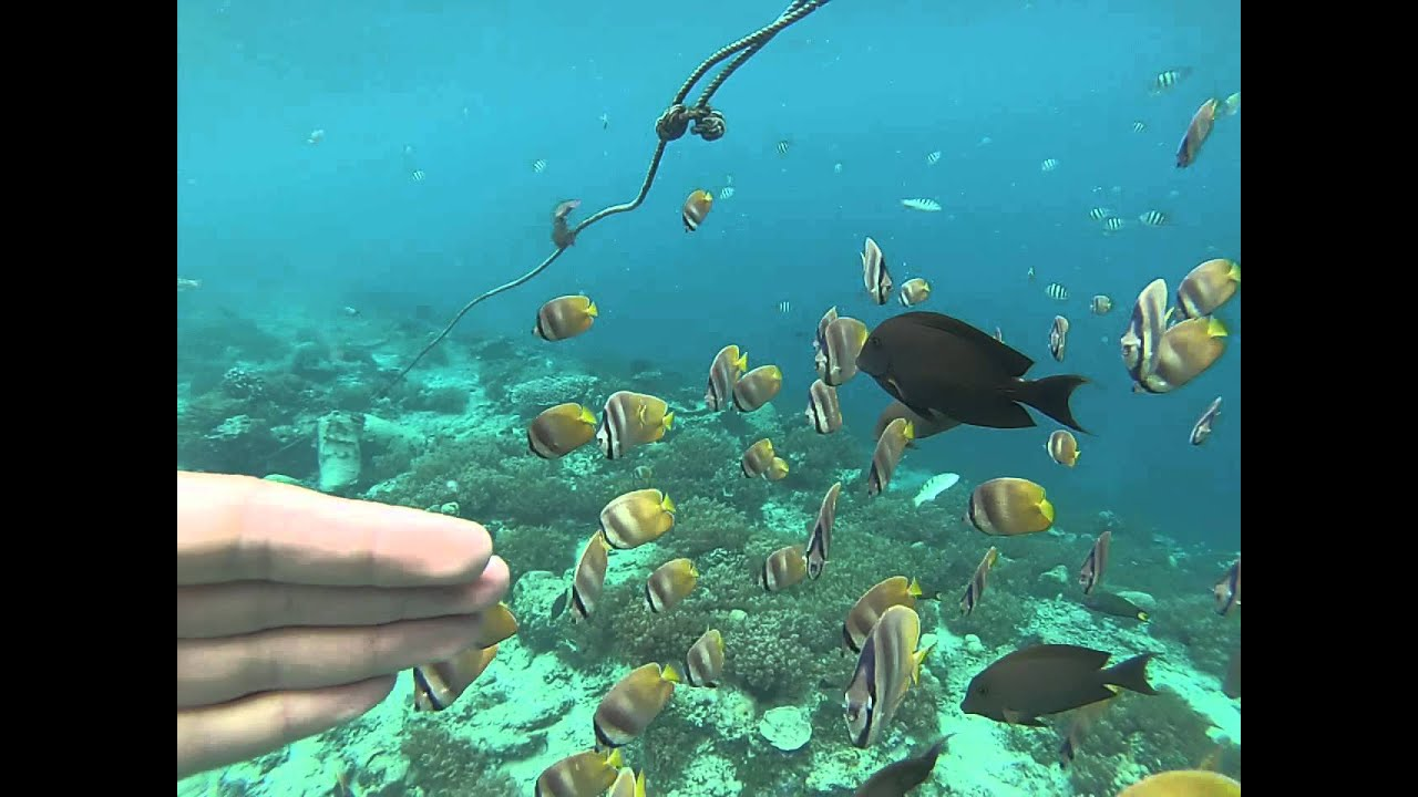 Caribbean Best Islands For Snorkeling
