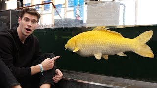 $15,000 KOI!! - Inside England's *LARGEST* FISH STORE...