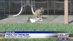 Feral cats cause flea infestation in Southside neighborhood