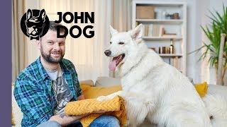 Jak nauczyć psa wycierania łap? – TRENING – John Dog