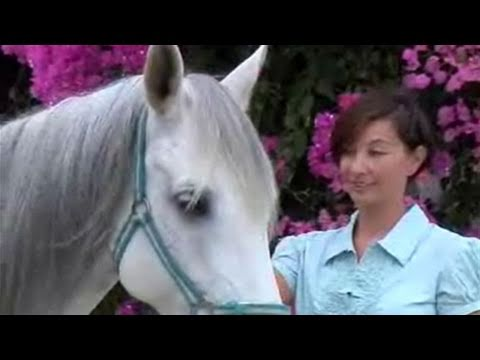 How To Do Horse Care