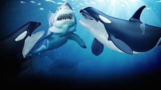 Эти Морские Животные Связались с не тем Противником!