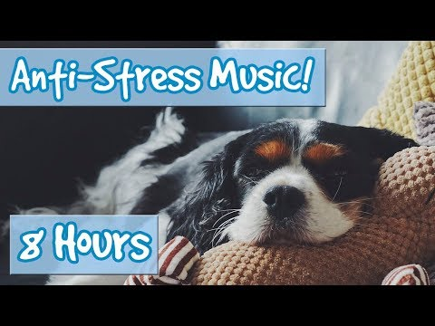 Have the Most Relaxed Dog! Relaxing Music for Easily Stresse