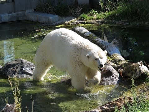 Vienna Zoo Trip
