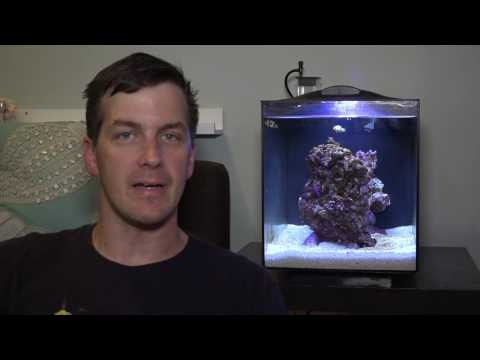 HOW TO: Cycle a Fluval Sea EVO Aquarium (ft. Mr. Saltwater Tank)