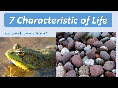 7 Characteristics of Life - YouTube