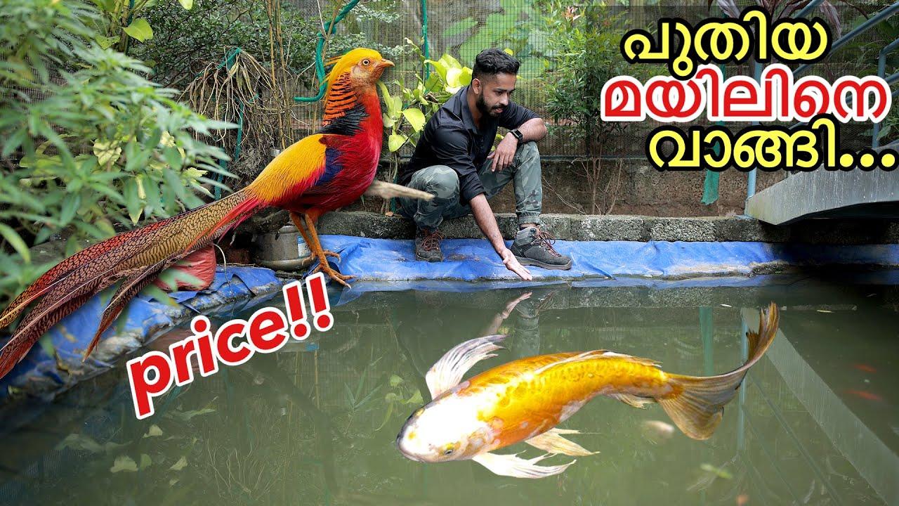 ദൈവമേ...40,000/- രൂപയുടെ മയിലോ???  | Bought New Expensive Bird