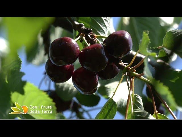 Puntata del 6/6/21 –  1° parte – E' tempo di ciliegie