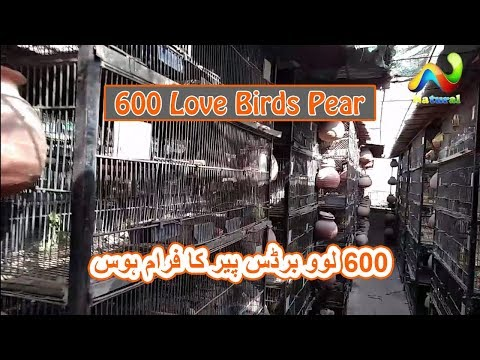 600 Singsl Cage Loverbirds Setup | My Friend Bird's Farm House