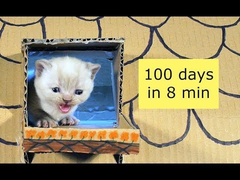 Kittens Time Lapse - 100 Days in 8 Minutes 4K